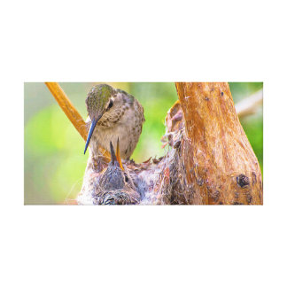 Mother Ana Hummingbird in nest with child Stretched Canvas Print