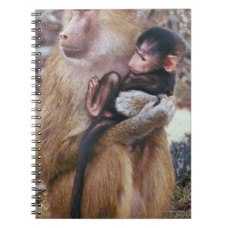 Mother and Baby Baboon Notebooks