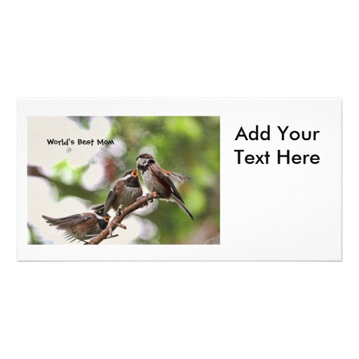 Mother and Baby Birds Custom Photo Card