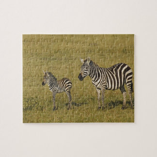 Mother and baby Burchell's Zebras, Equus Jigsaw Puzzle