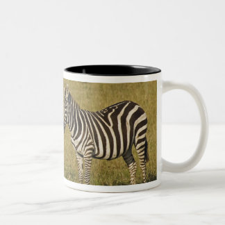 Mother and baby Burchell's Zebras, Equus Coffee Mug