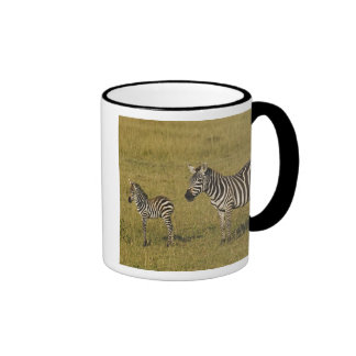 Mother and baby Burchell's Zebras, Equus Coffee Mugs