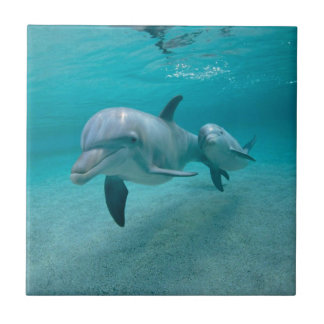 MOTHER AND BABY CALF DOLPHIN TILE
