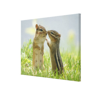 Mother And Baby Chipmunks In Grasses (Ontario) Canvas Print