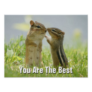 Mother And Baby Chipmunks In Grasses (Ontario) Poster