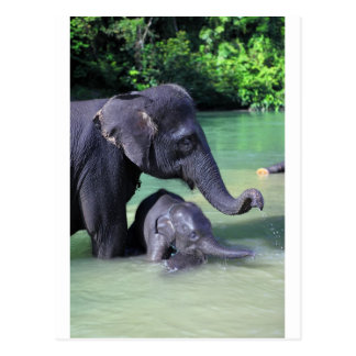 Mother and baby elephant in river postcards
