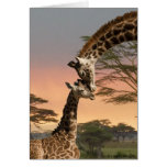 Mother and Baby Giraffe Card