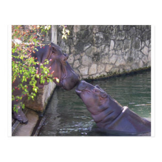 Mother and Baby Hippo Greeting Postcard