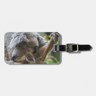 Mother and baby joey koalas asleep cuddling luggage tag