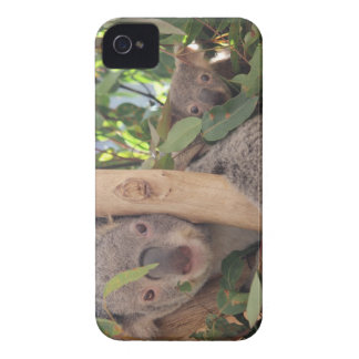 Mother and Baby Koala Case-Mate iPhone 4 Case
