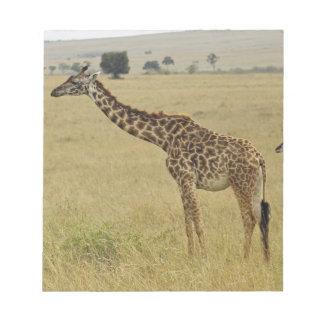 Mother and baby Masai Giraffe, Giraffa 2 Notepad