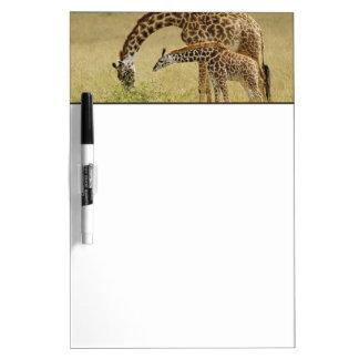 Mother and baby Masai Giraffe, Giraffa Dry Erase Board