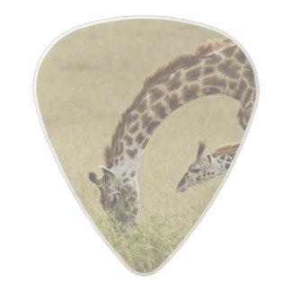 Mother and baby Masai Giraffe, Giraffa Acetal Guitar Pick