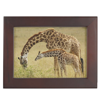 Mother and baby Masai Giraffe, Giraffa Keepsake Box