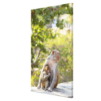 Mother and baby Rhesus Macaque monkeys on wall Canvas Print