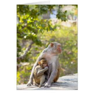 Mother and baby Rhesus Macaque monkeys on wall Card