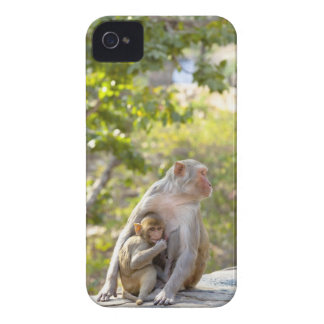 Mother and baby Rhesus Macaque monkeys on wall iPhone 4 Case