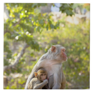 Mother and baby Rhesus Macaque monkeys on wall Large Square Tile