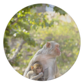 Mother and baby Rhesus Macaque monkeys on wall Plates