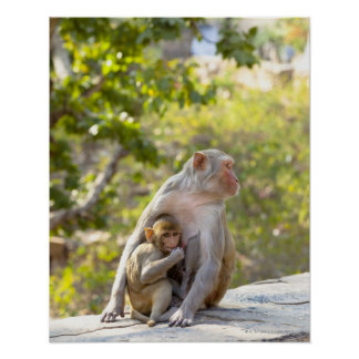 Mother and baby Rhesus Macaque monkeys on wall Poster