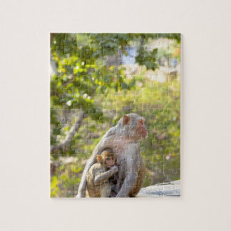 Mother and baby Rhesus Macaque monkeys on wall Puzzle