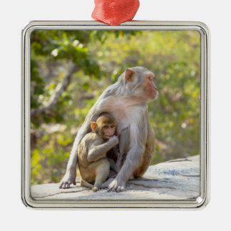 Mother and baby Rhesus Macaque monkeys on wall Silver-Colored Square Decoration