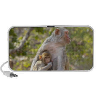 Mother and baby Rhesus Macaque monkeys on wall iPhone Speakers