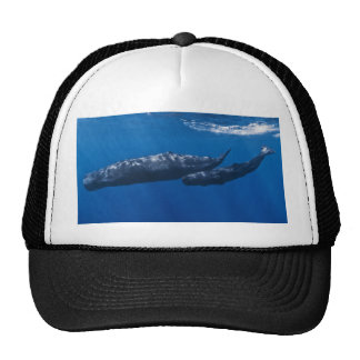 Mother and Baby Sperm Whale Physeter macrocephalus Cap