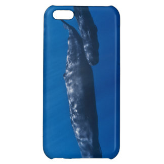 Mother and Baby Sperm Whale Physeter macrocephalus Cover For iPhone 5C