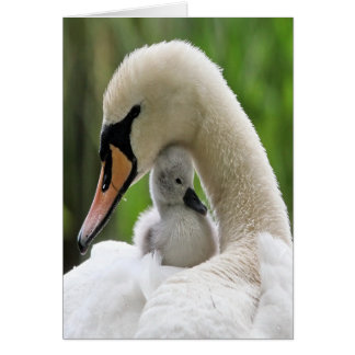 Mother And Baby Swan Greeting Card