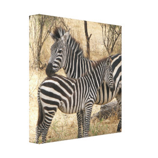 Mother and Baby Zebra  Canvas Print