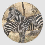 Mother and Baby Zebra  Sticker