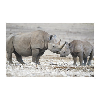 Mother and Calf Black Rhinoceros Diceros Bicornis Canvas Prints
