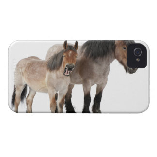 Mother and foal smiling, Belgian horse, Belgian iPhone 4 Case
