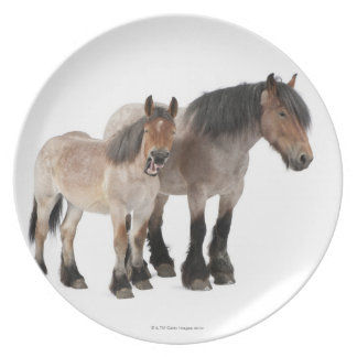 Mother and foal smiling, Belgian horse, Belgian Plate