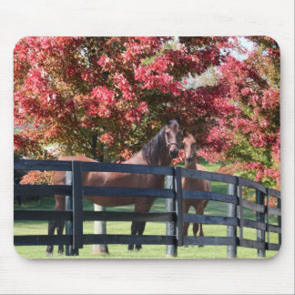 Mother and young horse mouse pad
