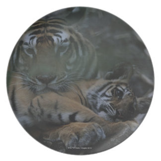 Mother Bengal Tiger with Cub Party Plates