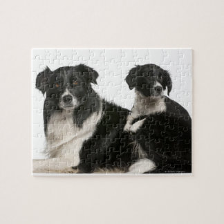 Mother border collie and puppy jigsaw puzzle