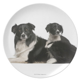 Mother border collie and puppy plate