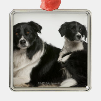 Mother border collie and puppy Silver-Colored square decoration