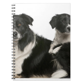 Mother border collie and puppy spiral notebook