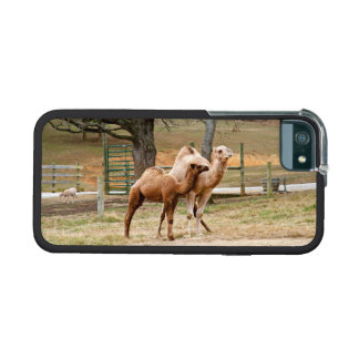Mother Camel and Baby Animal Photo Animal Lovers Case For iPhone 5