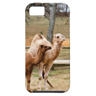 Mother Camel and Baby Animal Photo Desert Animal iPhone 5/5S Covers
