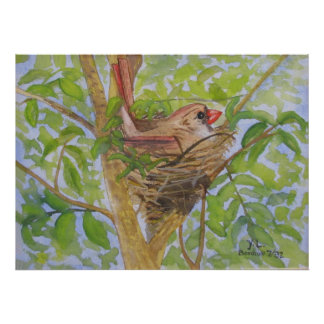 Mother Cardinal on Nest Poster