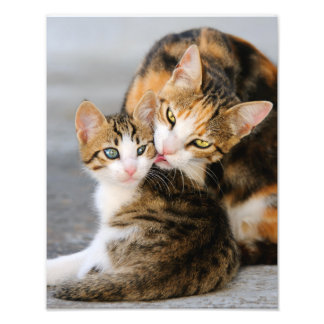 Mother Cat Loves Cute Kitten  - Paperprint Photograph
