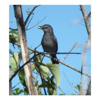 Mother Catbird Gathers Berries to her Feed Babies Photo Art
