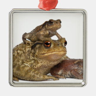 mother Common toad and her babies - bufo bufo Christmas Ornament