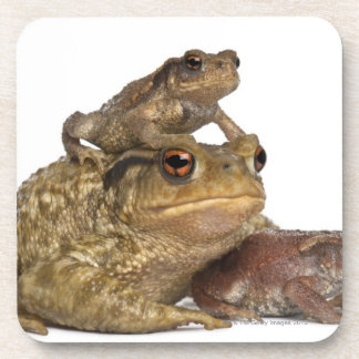 mother Common toad and her babies - bufo bufo Coaster