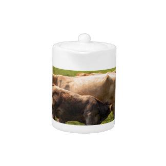 Mother Cow Nursing Baby