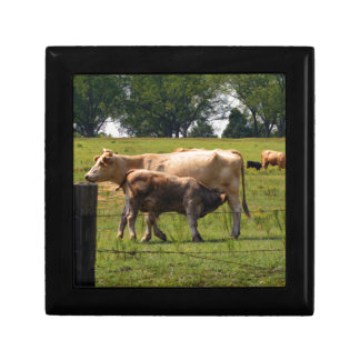 Mother Cow Nursing Baby Small Square Gift Box